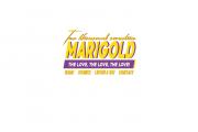 Hemsida & Logotyp - Marigold